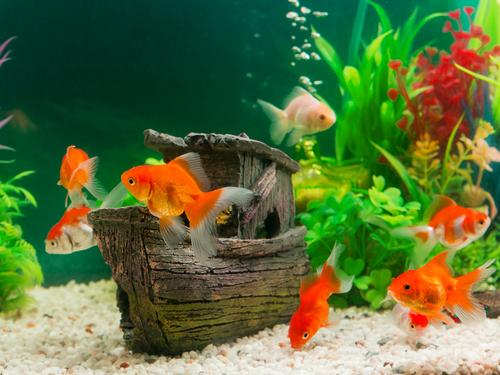 Alles voor je aquarium en vijver vind je bij GroenRijk Prinsenbeek