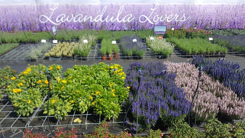 Diverse tuinplanten bij GroenRijk Prinsenbeek
