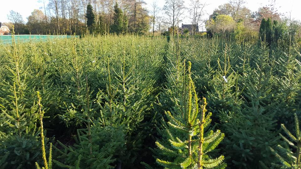 Kerstbomen Kopen Bij Breda Kom Naar Groenrijk Prinsenbeek