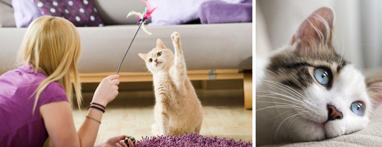 Alles voor uw kat of poes vindt u op onze dierenafdeling bij GroenRijk Schalk Prinsenbeek