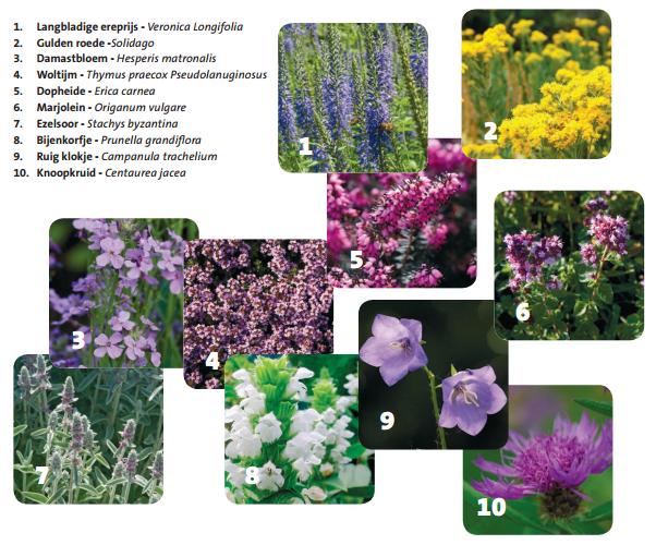 Planten Voor Bijen.Waarom Zijn Bijen Zo Belangrijk Groenrijk Prinsenbeek