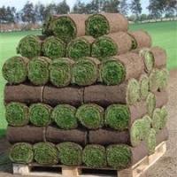 Graszoden bestellen GroenRijk Prinsenbeek