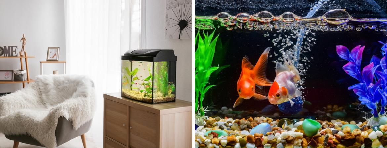 GroenRijk Schalk Prinsenbeek | Aquarium | Aquarium planten