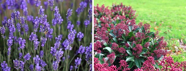 GroenRijk Prinsenbeek | Breda | Vaste planten