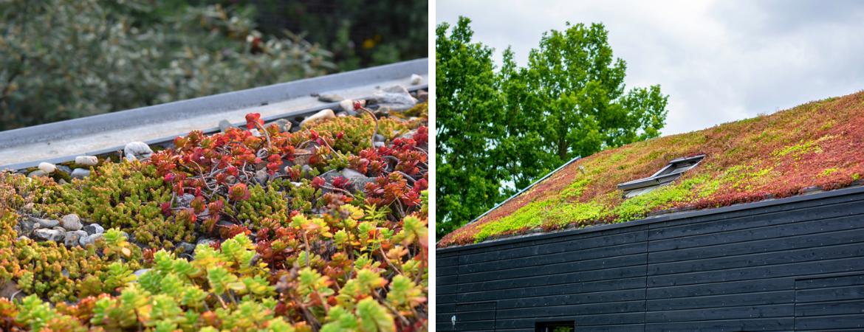 GroenRijk Schalk Prinsenbeek | Groen Klimaatplein | Groen dak