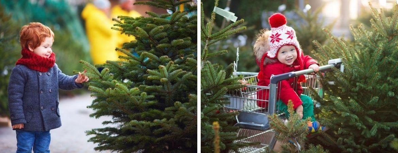 Kerstbomen kopen bij GroenRijk Schalk Prinsenbeek, nabij Breda