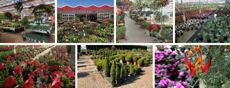 Tuinplanten | GroenRijk Prinsenbeek | Breda