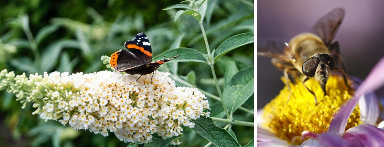 GroenRijk Prinsenbeek | Breda | Vlinders | Insecten | Tuin | Biodiversiteit