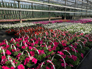 tuincentrum breda