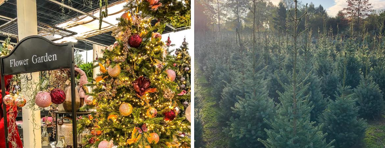 Tips om de kerstboom langer mooi te houden | GroenRijk Prinsenbeek