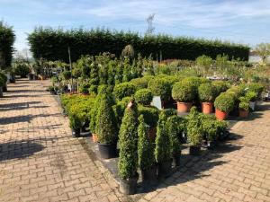 tuinplanten breda